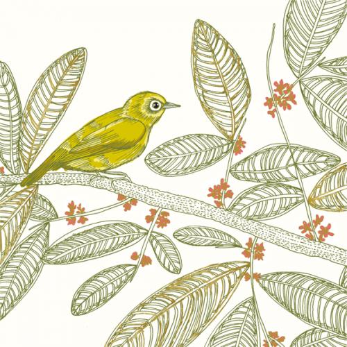 Sulawesi Lemon-bellied bird